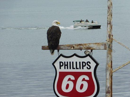 Nisswa, Μινεσότα: Eagle watching!
