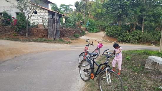 The Hills: Cycling through the empty roads of coffee estate