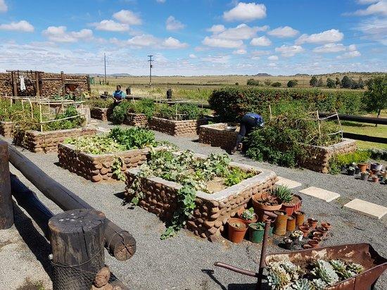 Springfontein, Sør-Afrika: 20180403_113618_large.jpg