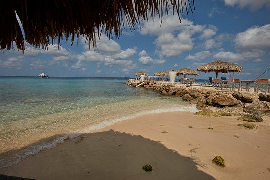 Divi flamingo beach resort and casino updated 2018 prices reviews bonaire kralendijk - Dive e divi ...