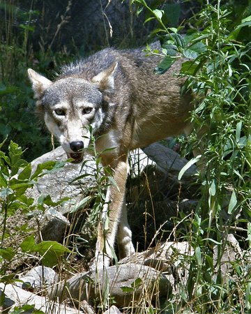 Western North Carolina Nature Center Reviews