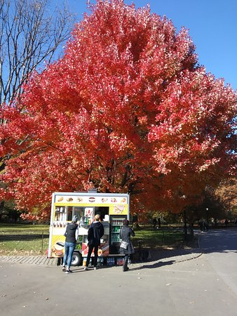 Central Park & Environs Walking Tours