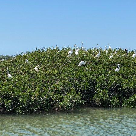 Sarasota Bay Explorers : photo1.jpg