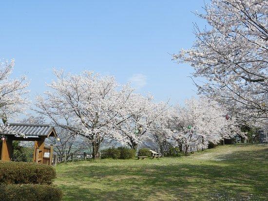 Mifune-machi, Japan: 花見ができそうなスペースがあります