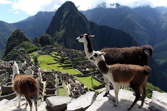 Chicha Travel Peru