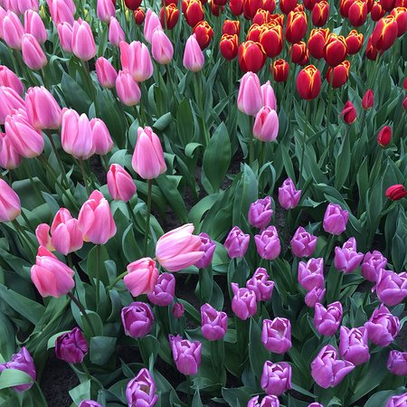 Keukenhof Gardens Half Day Guided Tour from Amsterdam with Free 1-Hour Cruise Photo