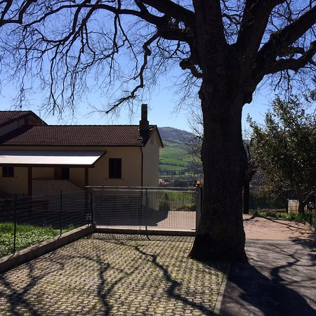 Serra San Quirico, อิตาลี: B&B Il Grande Albero