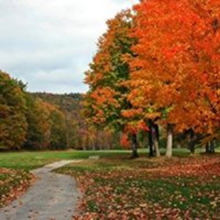 Comins, MI: Fall colors are always beautiful!