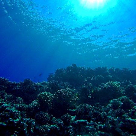 Lahaina Divers: photo2.jpg