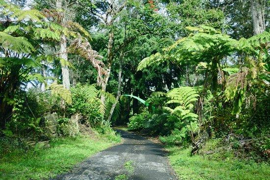 Holualoa, HI: View friving to the coffee estate