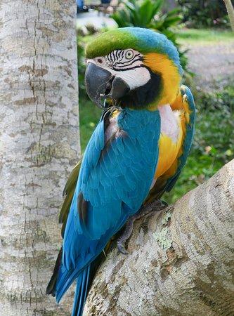 Holualoa, HI: Animals including talking parrots on the grounds