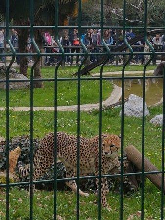 Parco Faunistico le Cornelle: IMG-20180402-WA0021_large.jpg