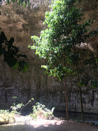Cenote with trees inside