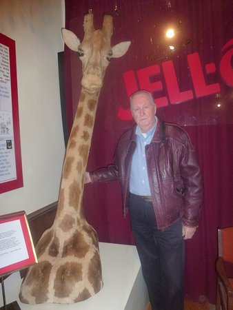 Le Roy, NY: Stuffed Giraffe - Perhaps Only One In North America
