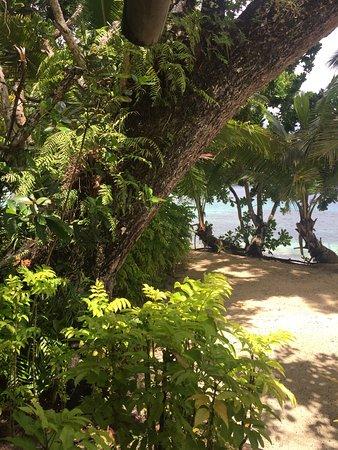 Qamea Island, Fiyi: Looking through the beautiful gardens out to sea