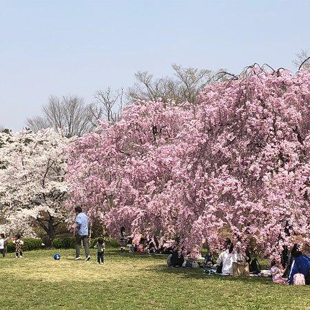 Hitsujiyama Park: photo1.jpg