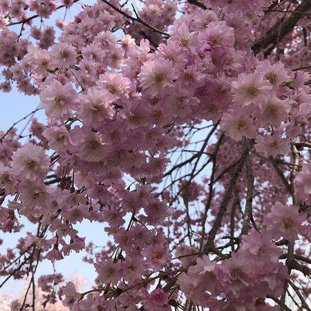 Hitsujiyama Park: photo2.jpg