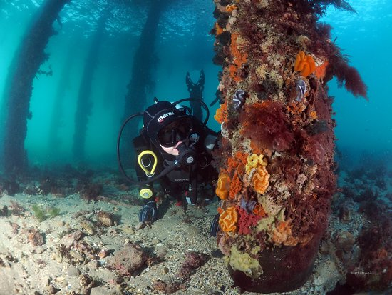 Bayplay - Open Water Course: Scuba Diving