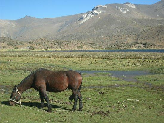 El Sosneado, Argentina: laguna