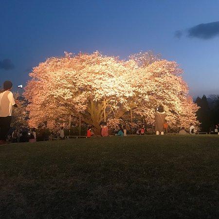 Isshingyo Park: photo0.jpg