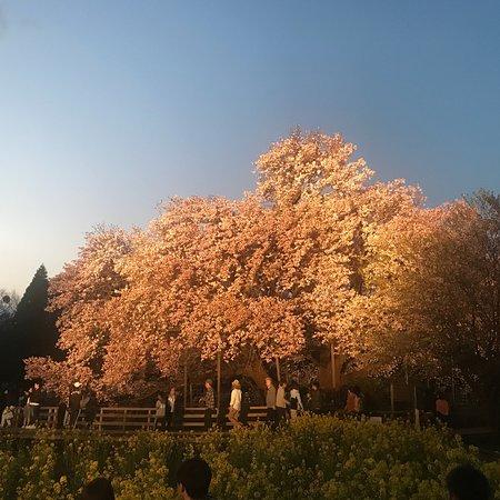 Isshingyo Park: photo1.jpg