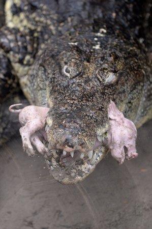 krokodille zoo sjælland