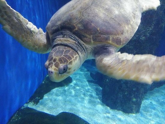 Virginia Aquarium & Marine Science Center: FB_IMG_1518016558885_large.jpg