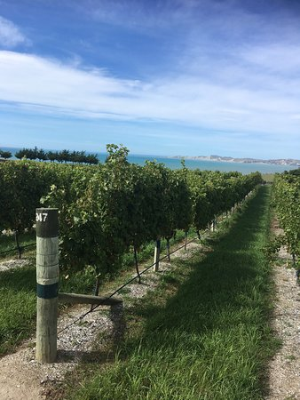 Yealands Estate Winery 사진