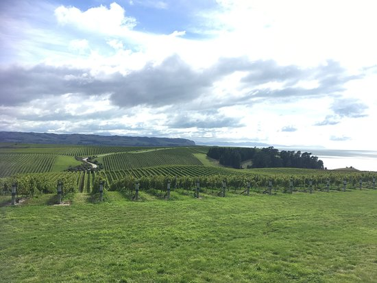 Seddon, New Zealand: Over the vines