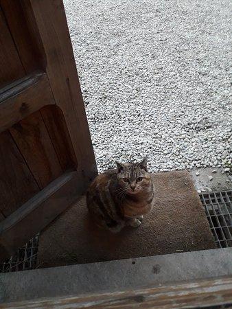 """Gatto """"Mascotte"""" della Fattoria"""