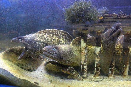 Aquarium of Faliraki