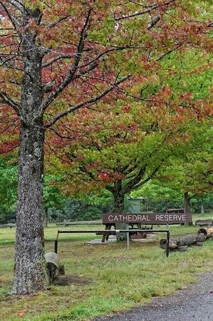 Mt Wilson, Australia: Cathedral Reserve