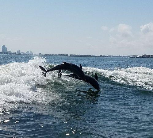 Best Dolphin Cruise Orange Beach