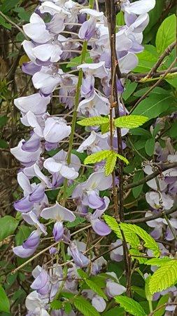 Hot Springs National Park: Beautiful blooms (in April)