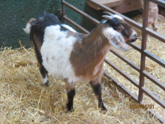 Ottawa, Canada: little animal farm