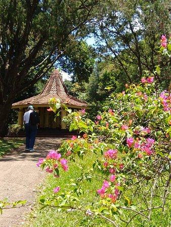 balade au milieu des bougainvilliers - Picture of Royal Botanical ...