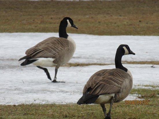 Ottawa, Kanada: Birds around the lake