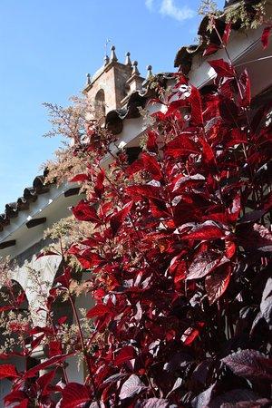 San Agustin Monasterio de la Recoleta Hotel : Beautiful grounds. Really well tended gardens.