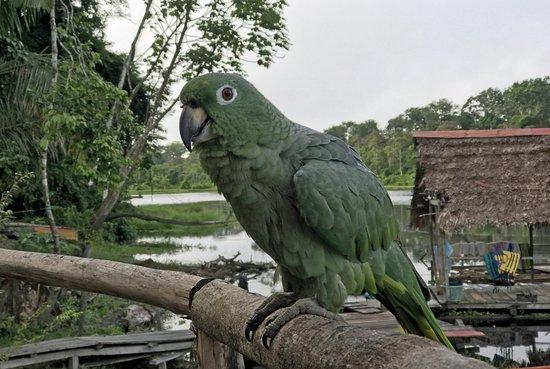 Puerto Alegría, Perú: Oh! So eine neugieriger kleiner Freund :-)