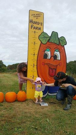 Modena, NY: Photo shoot at Hurds Family Farm