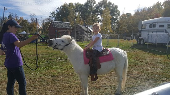 Modena, NY: Pony Rides by Kids Activities