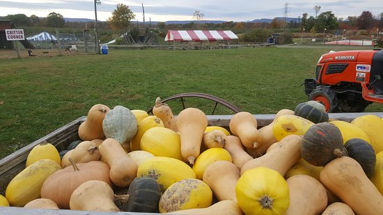 Modena, NY: Fresh Picked Squash and Birthday Tents