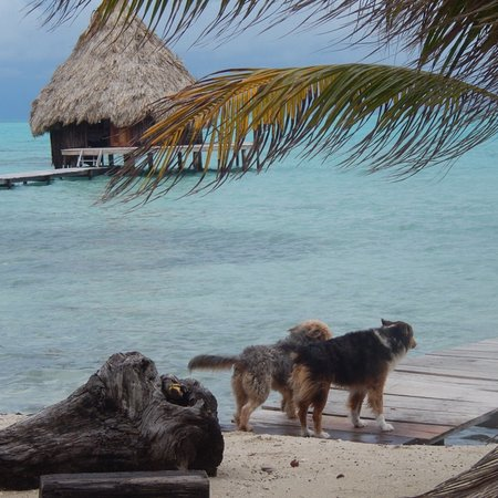 Glovers Reef Atoll, Belize: Glover's Atoll Resort