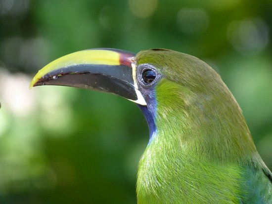 Stella's Bakery: Emerald Toucanette on the bird feeder