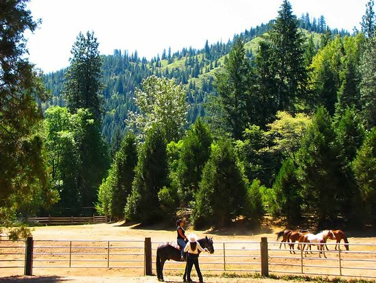 Coffee Creek Ranch: Lessons in the round pen