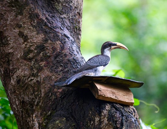 Sinharaja Forest Reserve: bird