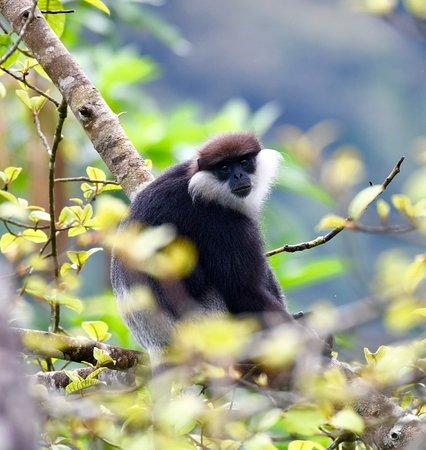 Sinharaja Forest Reserve: monkey endemic