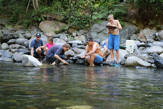 Trinity Center, CA: Gold panning in Coffee Creek
