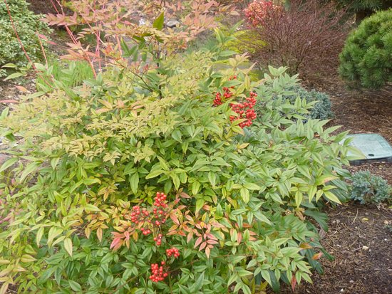 Plants in the garden with plenty of color - Picture of Gresham ...