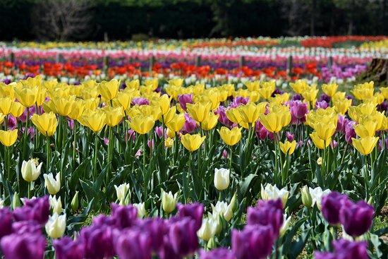 Umami-kyuryo Park